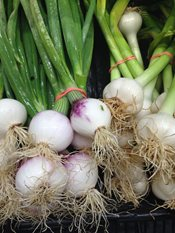 Spring Onions Farmstand